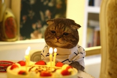 Cat in front of cake with lit candles.