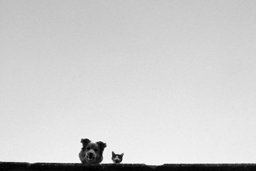 Dog at cat looking over edge of building at photographer