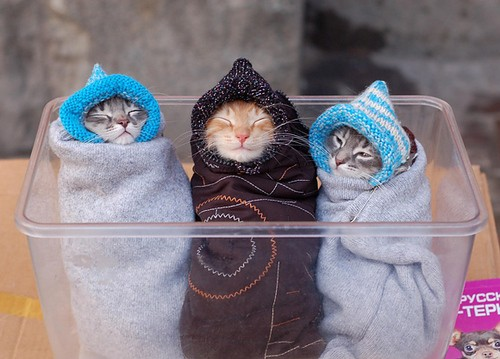 3 kittens, bundled and boxed